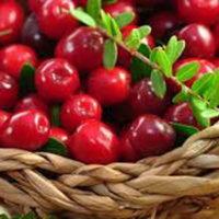 น้ำแครนเบอรี่ Cranberry กิฟฟารีน